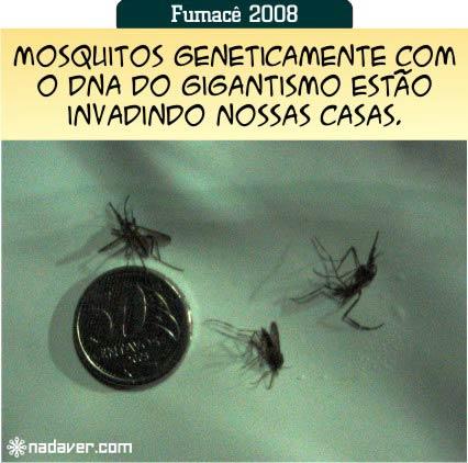 mosquitos-mutantes-export.jpg