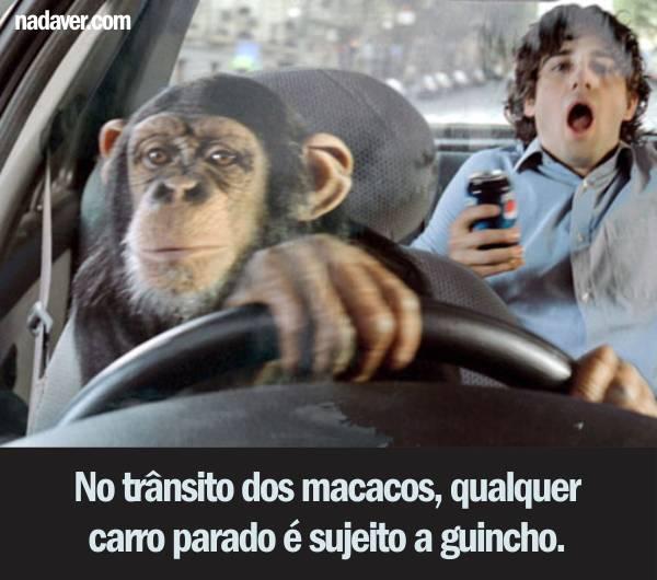 guincho2